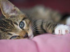 kitten stories make good viral content